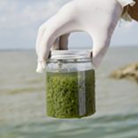 Algae Outbreaks Rise Sharply from Coast to Coast