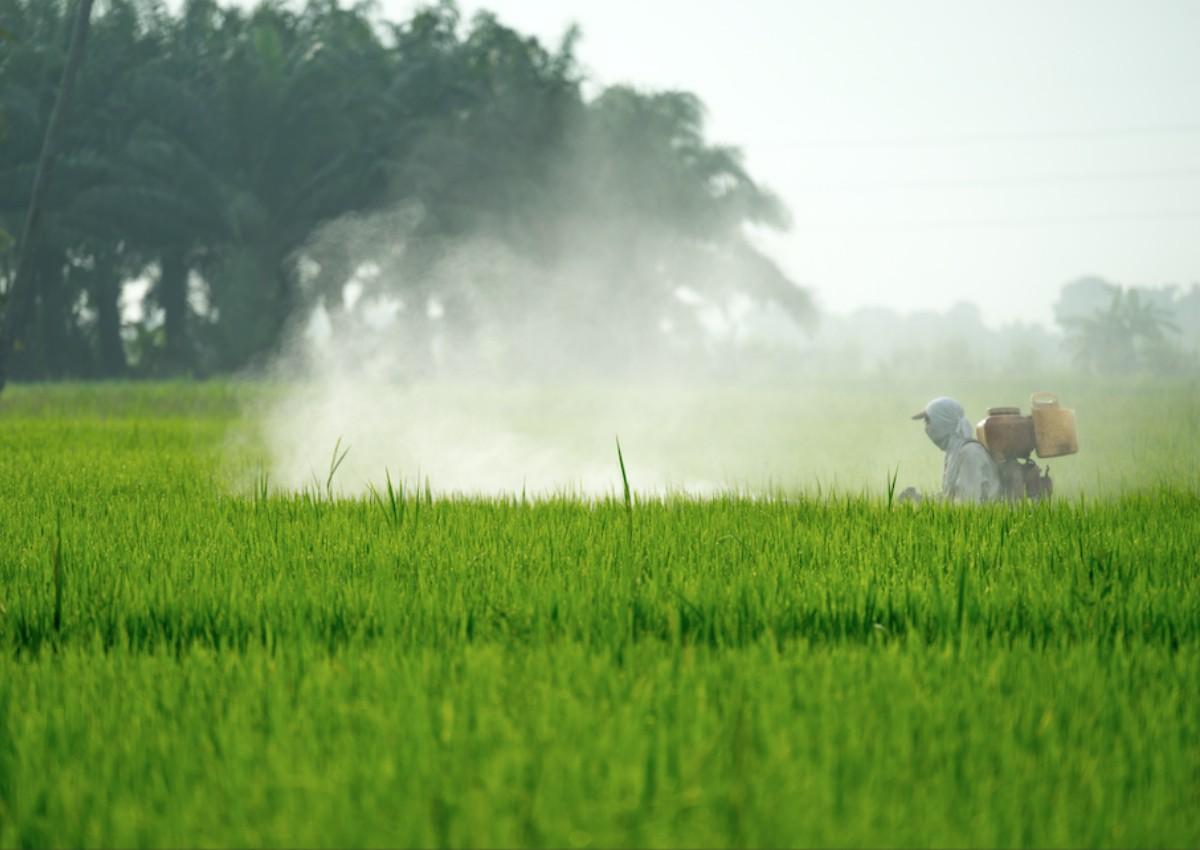 Moms Exposure To Monsanto Weed Killer >> Cancer Risks From Monsanto S Weedkiller Deserve Further Scrutiny