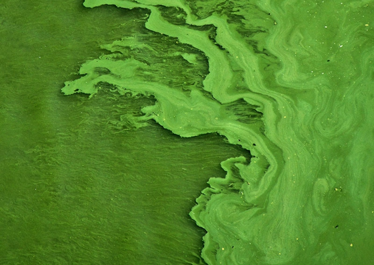 EWG analysis: More testing needed to keep people safe from algae toxins in Upper Midwest