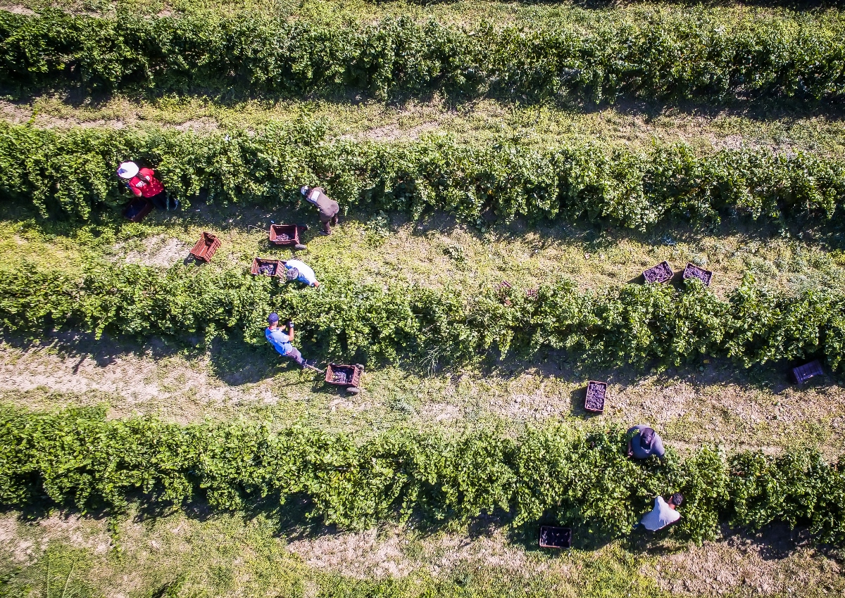 Congress Should Tap CCC Funds to Protect Farmworkers