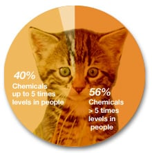 Pie chart showing chemical contamination of pet cats