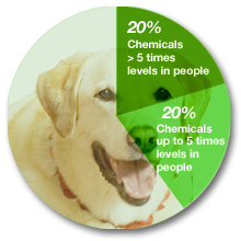 Pie chart showing chemical contamination of dogs