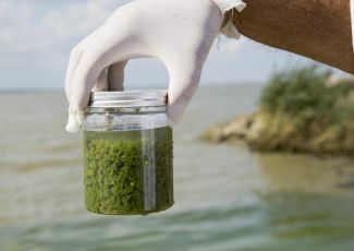Hundreds of potentially toxic algae outbreaks have plagued water in 2021