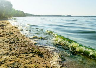 Toxic algae exposure leads to more than 300 emergency room visits in three years