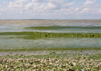 Lake Erie's annual algae outbreak mostly threatens health of people in disadvantaged communities