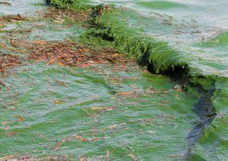 It's already a big year for algae outbreaks